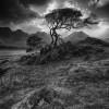 Elgol tree