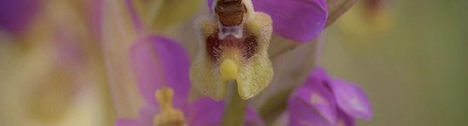 Orquídeas de Cinco Villas